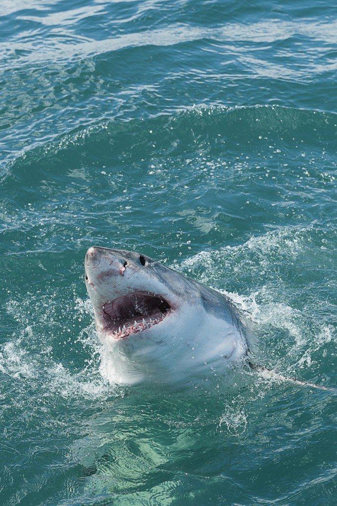 Hey! Watch Shark Week