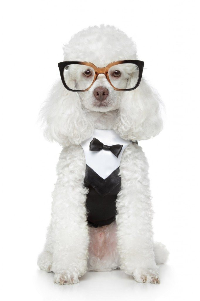 The Gift of Sight for a Lucky Poodle
