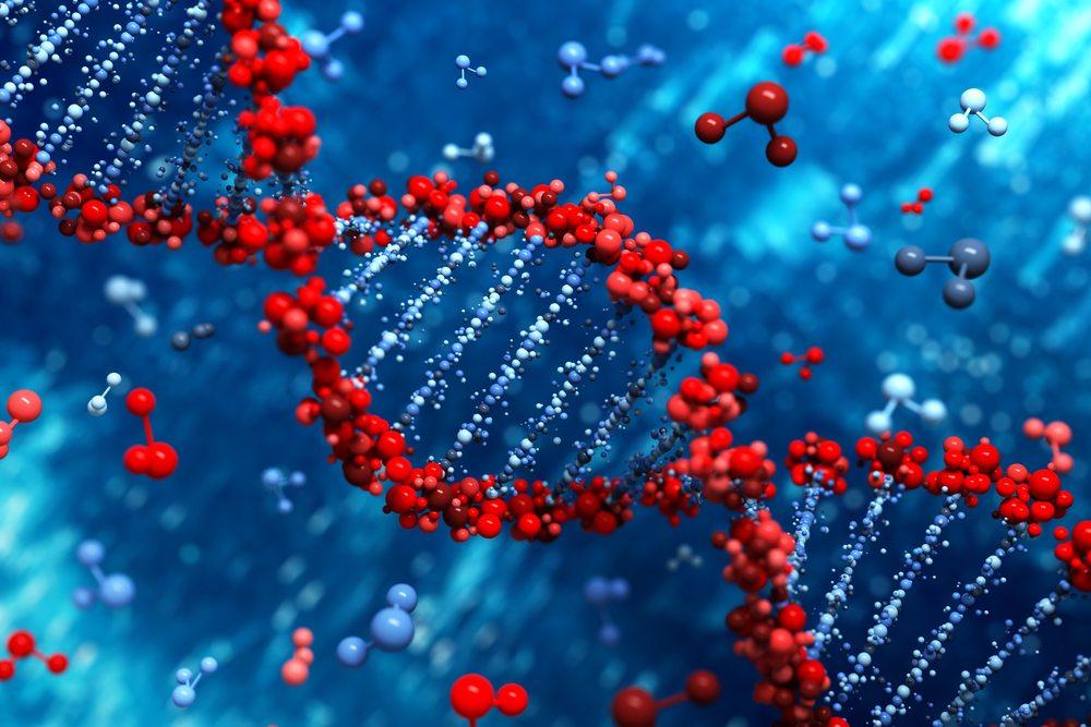 GMOs do not alter Human DNA