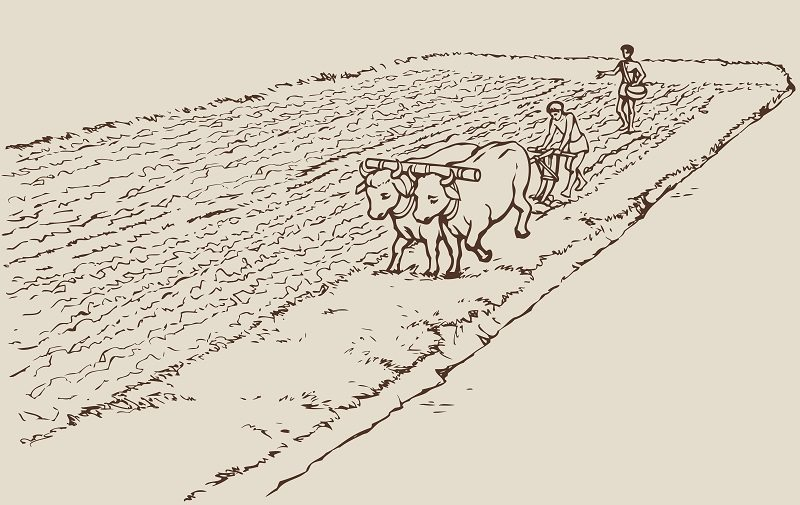 Genetically Modified Organisms (GMOs) have been used in Ag for centuries.  Probably as long as humans have farmed