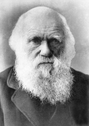The Descent of Man, and Selection in Relation to Sex by Charles Darwin