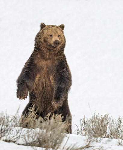 Grizzly Bear Strength.  Like old man strength but stinkier and stronger.