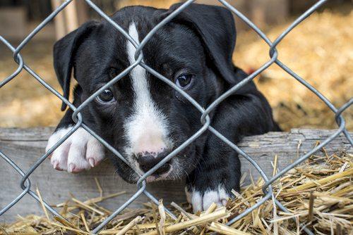Craigslist shut down puppy mill sales
