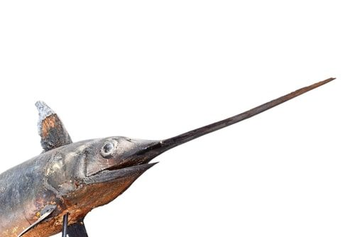 The Swordfish.  Fast and dangerousa a real double threat.
