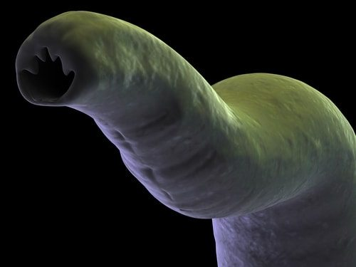 Top 10 Facts about Hookworms and Autoimmune Disease