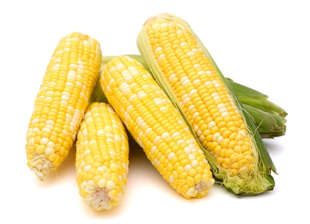 Top 10 Fascinating Facts About Corn