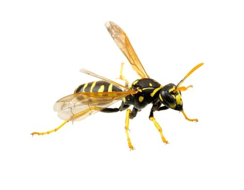 Wasps! You zombie making motherf*ckers