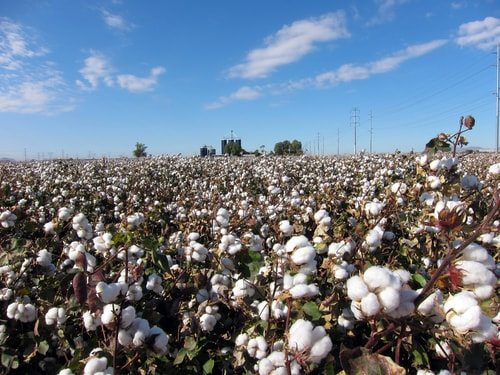 Invention of Cotton Gin has unforgettable historical significance.