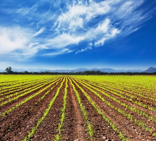 Row crops and strip farming, the kernels of modern Ag