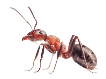 Top 10 Amazing Facts About Ants