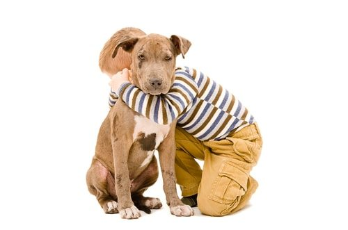 Well trained dogs are good with children, including pitbulls.