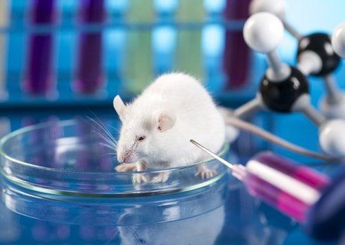 Animal testing causes horrible suffering