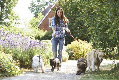 Start a dog walking business. Dogs rock!