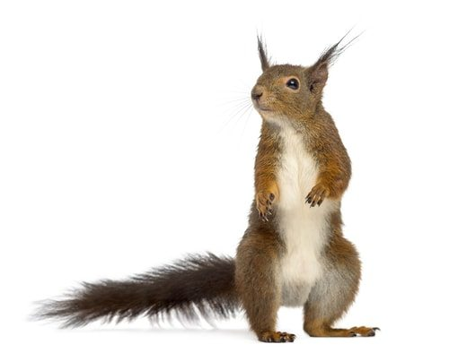 Hey look a squirrel! Gotcha. Stay on topic and stay focused.