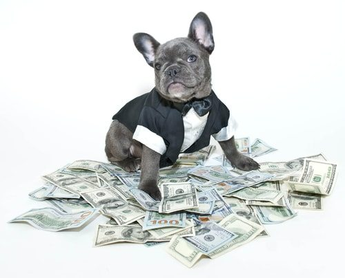 French Bulldogs are a spendy proposition!