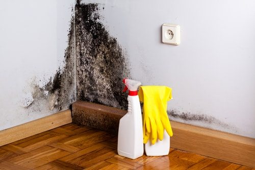 Hoarders put themselves at serious health risk with black mold being just one troublesome issue.