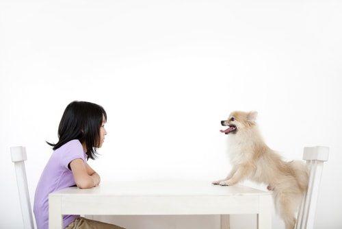 Pomeranians and kids don't mix.