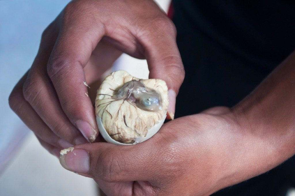 Balut Baby Chick Delicacy