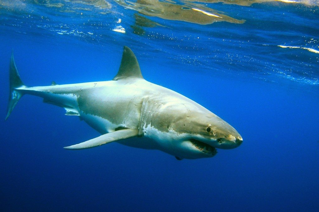 Shark Week Cruising
