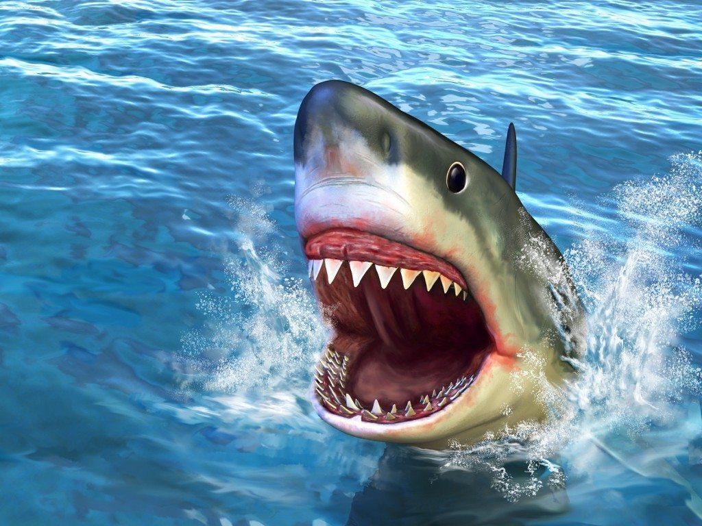 Shark Week Don't Get Chomped