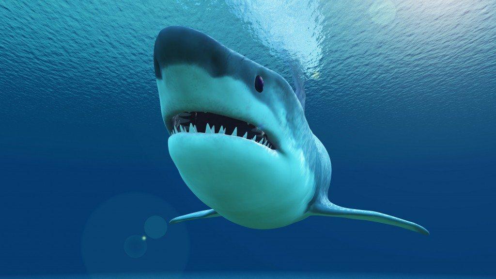 Shark Week's Tough Customer