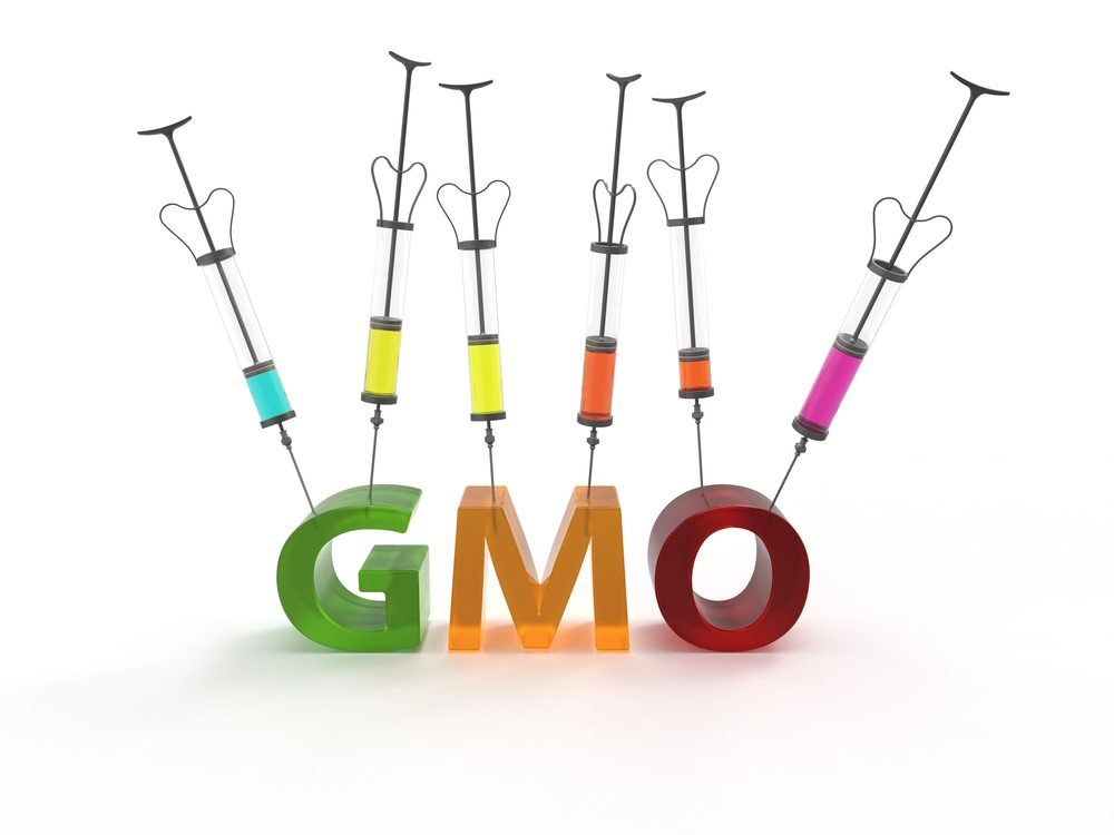 the truth about genetically modified organisms Gmo stands for genetically modified organism essentially combining different genes whether it be a jellyfish and a tomato or any other type of plant.