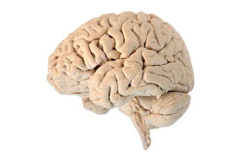 Albert Einstein's brain was stolen