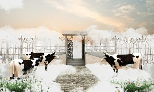 Here's proof! A picture of the pearly gates and cows.  Cause heaven has ice cream duh. And without cows no ice cream!