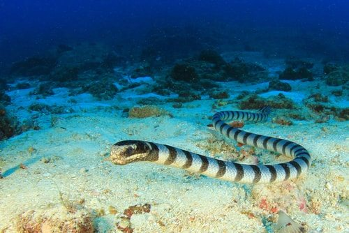 Sea snake. Slithery and dangerous.