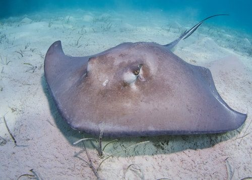 Stingray. F-you stingray. We loved Steve Irwin.