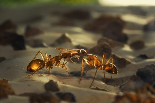 Ant food kiss. Yuck.