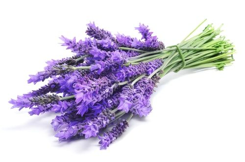 Eat lavender to Naturally lower your blood pressure.