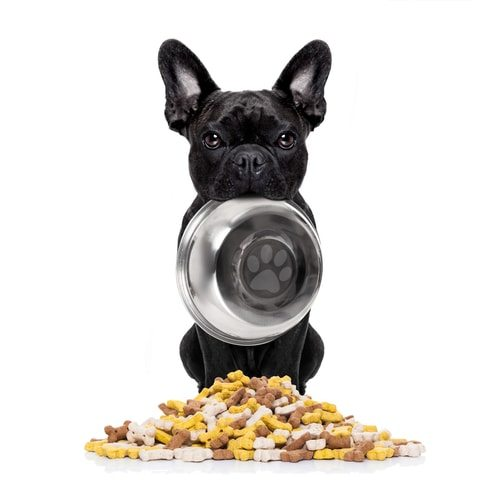 French bulldogs prefer only the finest vittles.