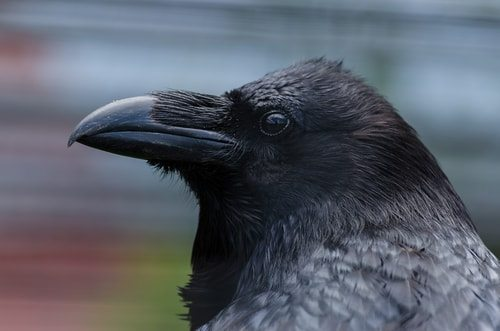 Marie's not Marie. She's a Raven.