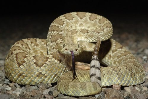 10 Most Poisonous Snakes In The World | Top 10 Lists ...