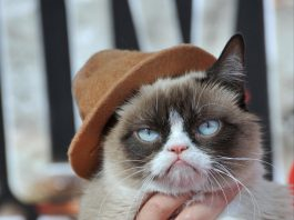 The Top 10 Most Famous Internet Cats